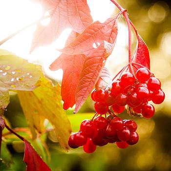 Matt Dobson - Cranberry Bliss