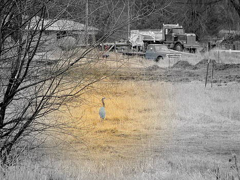 Crane in Pasture by Amy Bradley