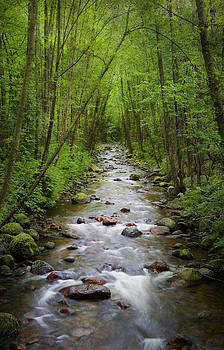Creek in the forest by Marlene Ford