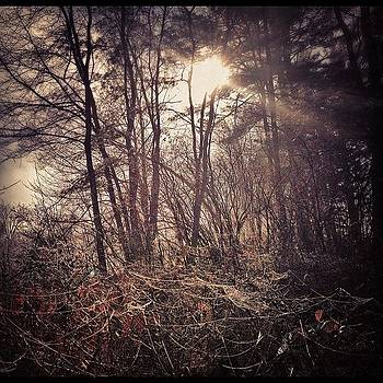 Creeping Around The Woods This Morning by Mark Scheffer
