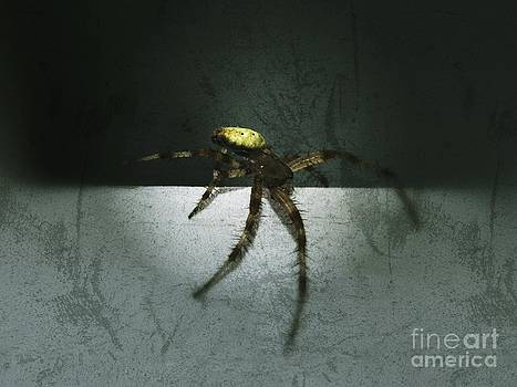 Creepy Spider by Christy Bruna