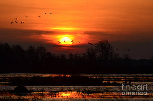 Crex Sunrise by Whispering Feather Gallery