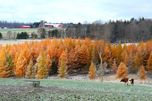 Crisp Fall Morning On The Farm by Beverly Kobee