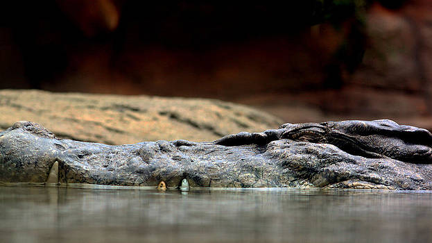 Crocodile by Douglas Clulow