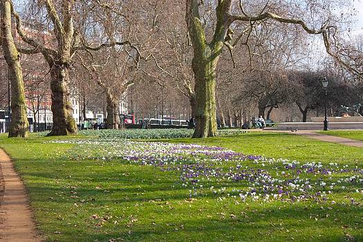 Yvonne Ayoub - Crocus Time in Hyde Park