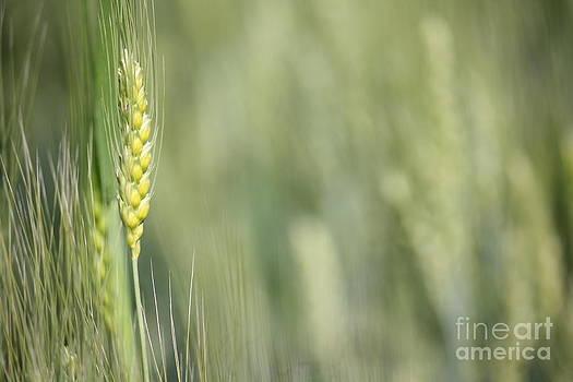 Crop by Vishakha Bhagat