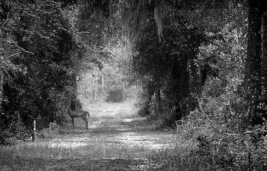 Lynn Palmer - Crossing Paths