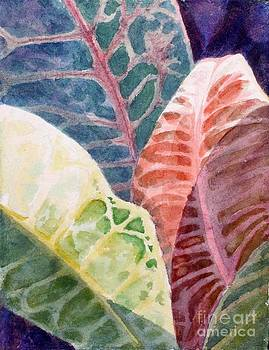 Croton by Judith A Smothers