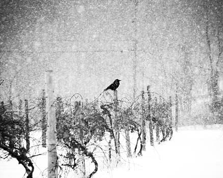 Crow in Snowy Vineyard 2011 by Joseph Duba