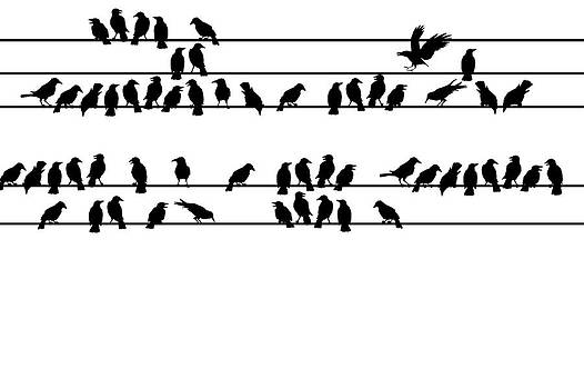 Crows by Allen Klein