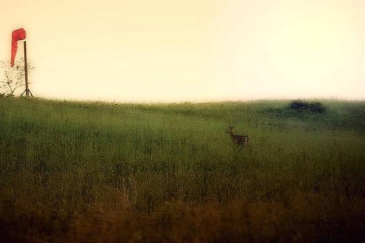 Darlene Bell - Curious Deer