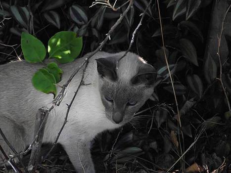 Curious Kitty by Rani De Leeuw