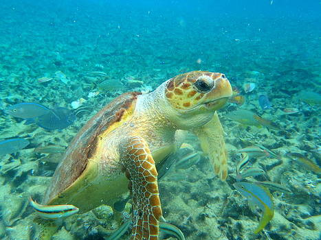 Curious Tortuga by Steve Madore