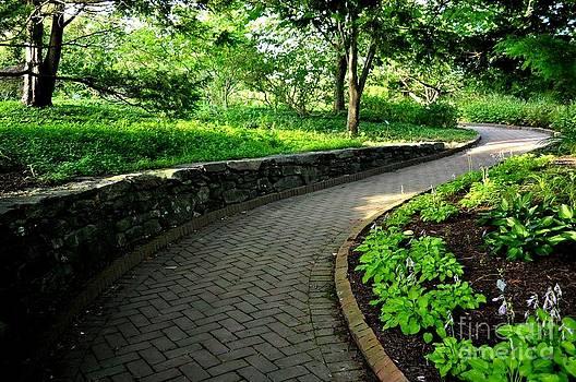 Curve Path  by Gwen  Dubeau