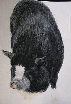 Cute Black Piggy Pet Portraits Original Watercolor Memorial U Provide Picture or Idea 9 x 12 inch  by Shannon Ivins