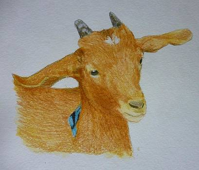 Cute Goat Pet Portrait 5 x 7 inch Watercolor You Provide the Picture or Idea Made to Order  by Shannon Ivins
