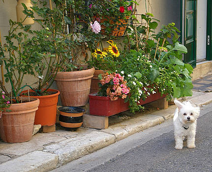 Cutest pup in France by Christine Burdine