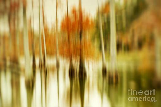 Scott Pellegrin - Cypress Morning