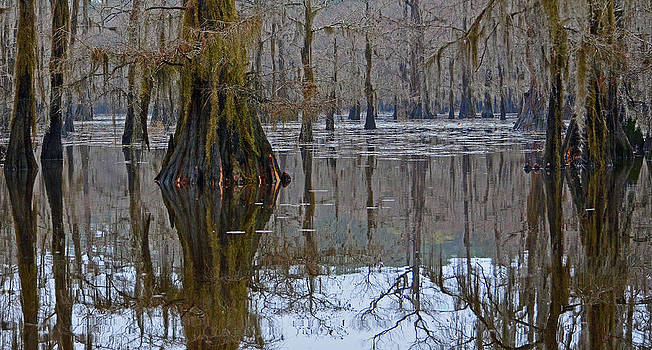 Cypress Reflections on Caddo Lake by Charles Frieda