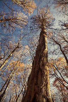 Cypress Trunk by Susan Isakson