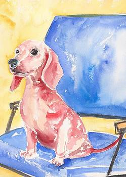 Dachshund  by Rachel Dutton