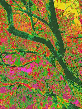 Daddy's Oak Tree by Tracy Daniels