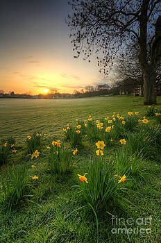 Yhun Suarez - Daffodils And Sunrise At The Park