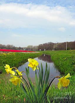 Daffodils in Holland 02 by Ausra Huntington nee Paulauskaite