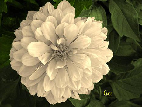 Dahlia Beauty by Julie Grace