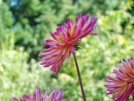 Baslee Troutman - Dahlia Flower art print Green Summer Garden