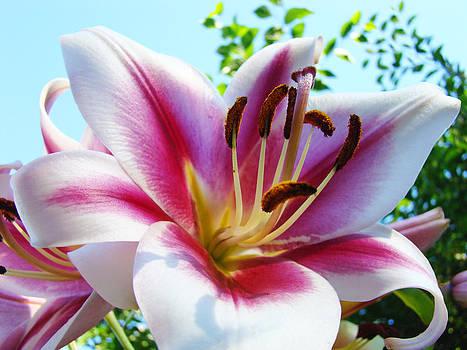 Baslee Troutman - Dahlia Flower art print Summer Dahlieas Floral