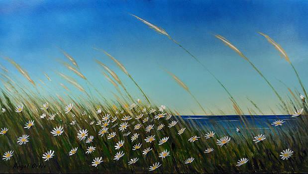 Daisies by Angel Ortiz
