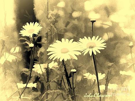 Daisies In The Wild by John Clawson