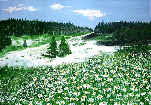Daisies by Sonya Ragyovska