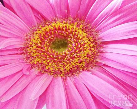 Daisy 1 by Lorraine Louwerse