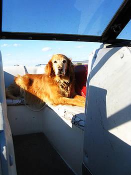 Daisy Boating by Ian Stevenson