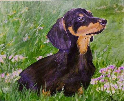 Daisy In Clover by Maureen Pisano