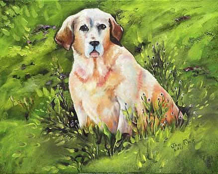 Daisy by Jan Fink