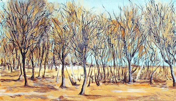 Dana's Woods by Robert Harvey