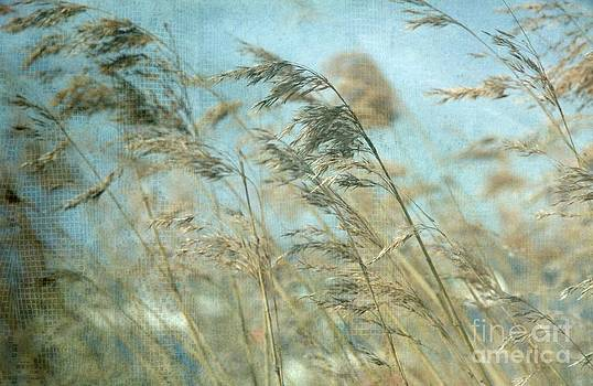 Dance with the wind by Anne Seltmann