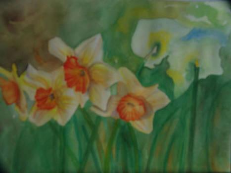 Dancing Daffodils by Linda Krupp