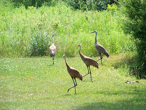 Dancing Sandhills by Jennifer  King