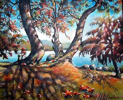 Dancing trees Rocky Point Park BC by Dumitru Barliga