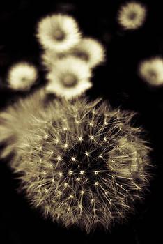 Dandelion And Daisies by Grebo Gray