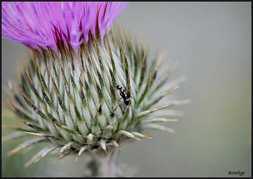 Daring Ant by Stellina Giannitsi
