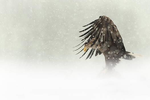 Dark Angel by Andy Astbury