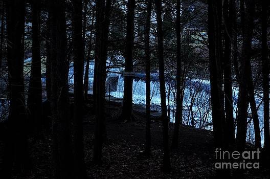 Dark Forest  by Gwen  Dubeau