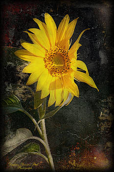 Darlene Bell - Dark Sunflower