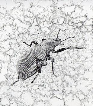 Darkling Bug by Inger Hutton