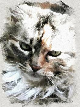 Darling 'Kitty' by Brian D Meredith